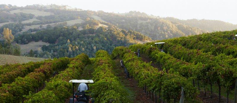 Rodney-Strong-Vineyards